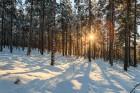 Winter im Wald, Schweden