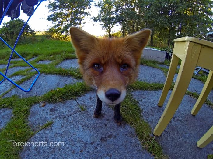 Portrait mit der GoPro