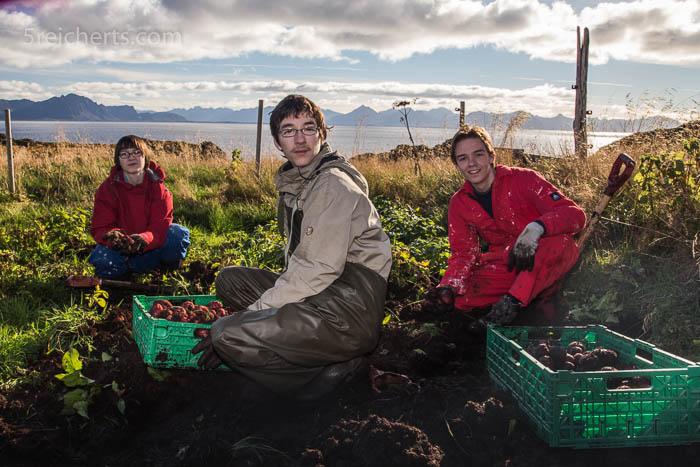 Die Kids ernten die Kartoffeln auf der kleinen Insel