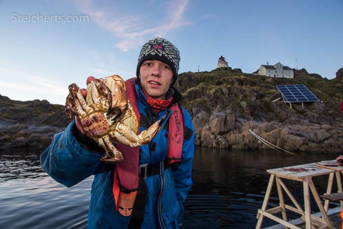 Die Fischköpfe locken Krabben an