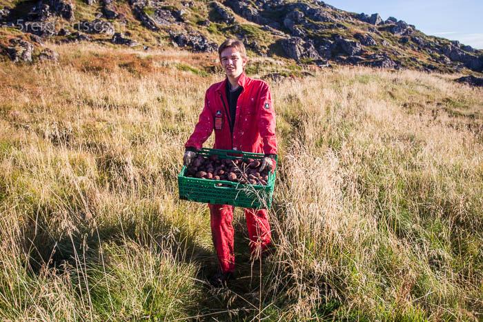 Kartoffelernte - Esra trägt die Kisten querfeldein zum Wohnhaus