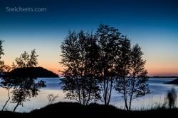 Bäume am Fjord