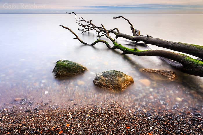 der Baum im Meer