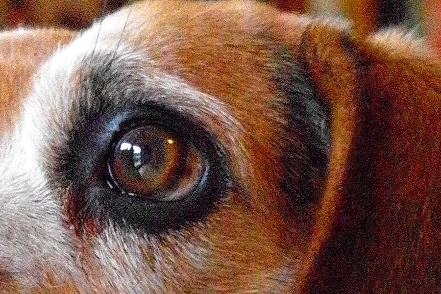 ucky Beagle X2 Ausschnitt
