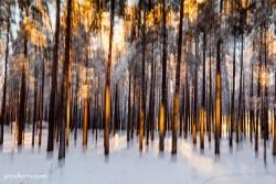 Schwedischer Winterwald
