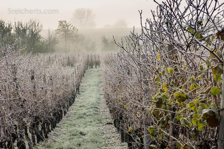 Weinberge im Winterfrost