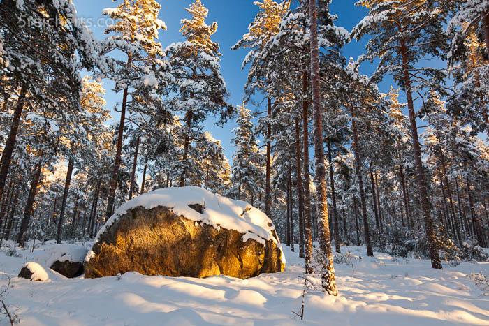 schräges Sonnenlicht auf einem Fels, Waldlandschaft in Schweden