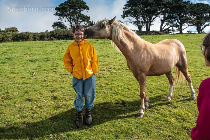 Wanderung über die Pferdeweide