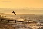 Pevensy Bay, EnglandPevensy Bay, England