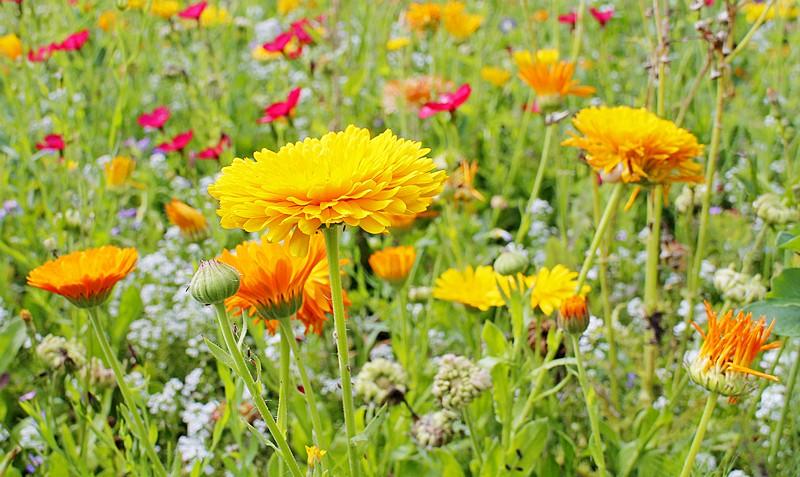 Sonnige Blumenwiese. Zum fokussieren habe ich einfach die Blume mit dem Finger angetippt.  22mm, 1/128 sec, Blende 8, 100 ISO