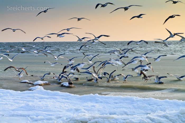 Möwen über den Eiswellen