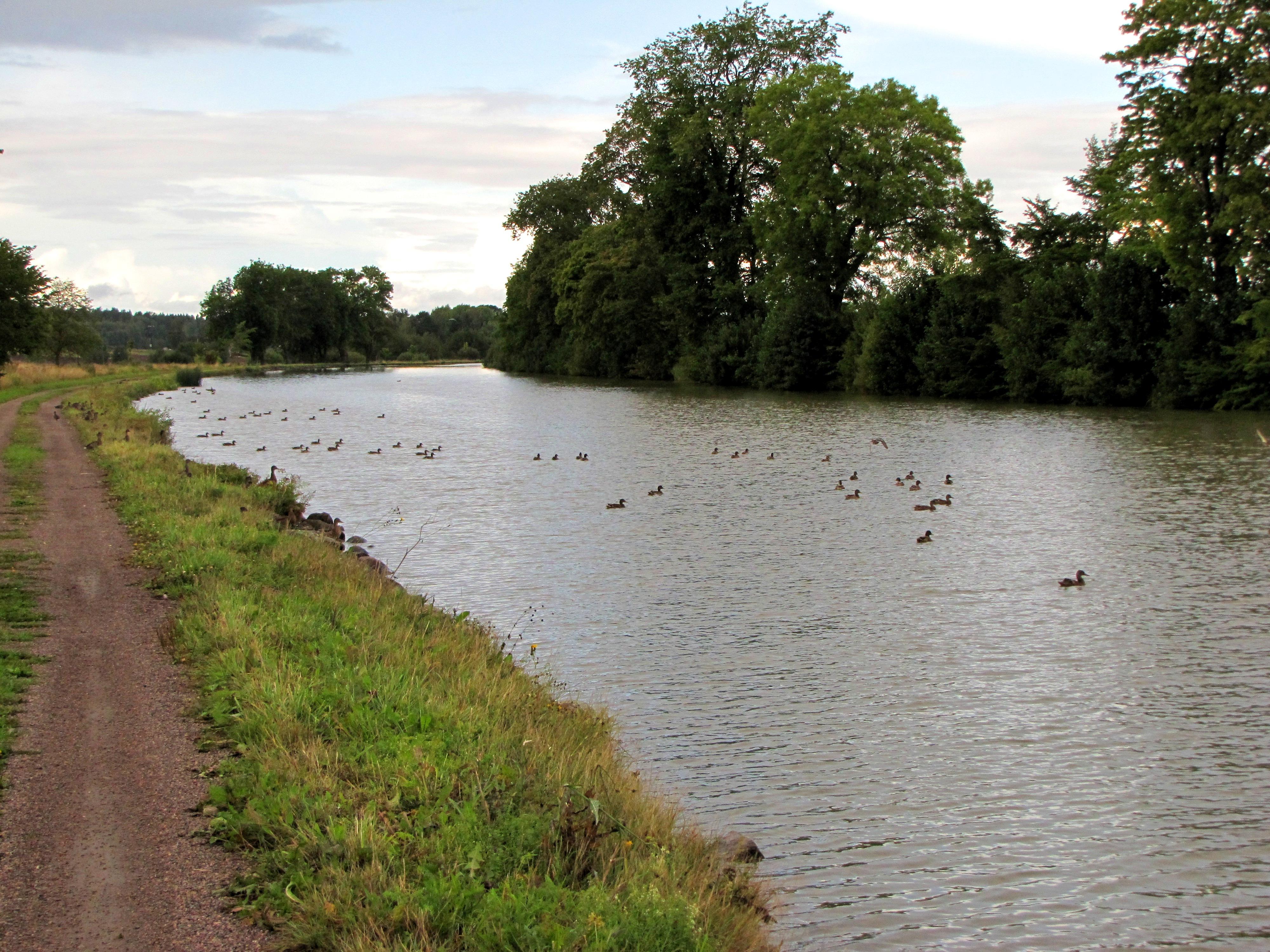 Enten auf dem Göta-Kanal. Der Radweg verlief oft buchstäblich einen Meter neben dem Kanal.