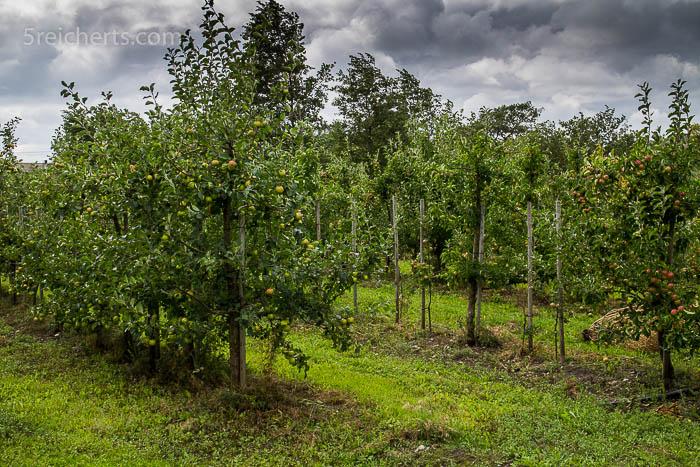 Apfelplantage im Windschatten