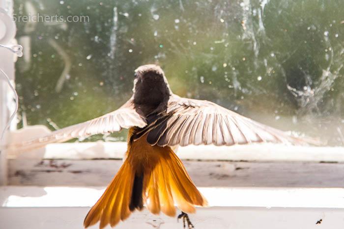 Ein Vogel versuchte vergebens den Tumr zu verlassen - wir halfen ihm schließlich wieder in die Freiheit