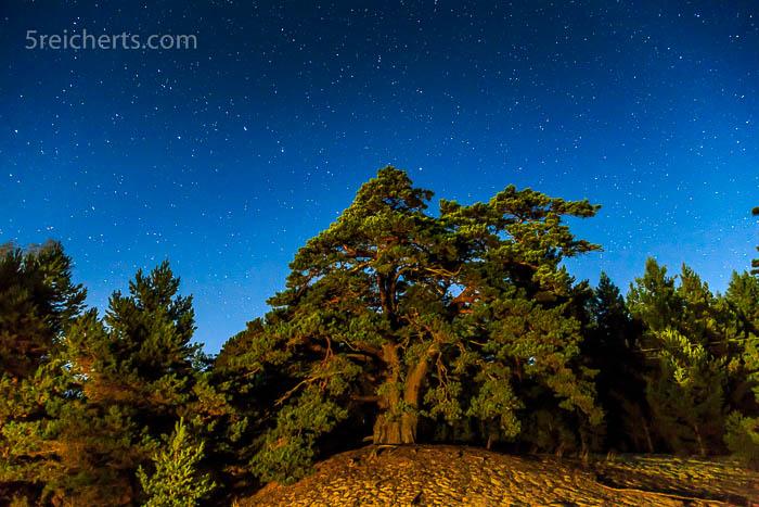 Baum und Sterne, was ist Zeit und Raum?