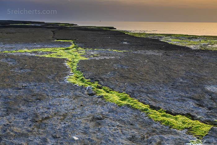 Naturschutzgebiet Neptuni åkra und die Segelboote