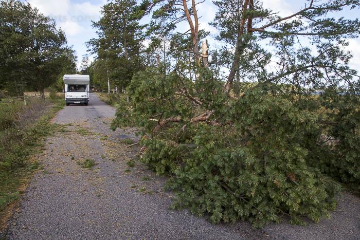 Sturmschaden in ÖlandSturmschaden in Öland