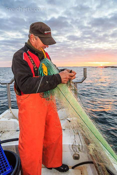 Die Sonne kommt und Fisch wandert in die Fischkiste