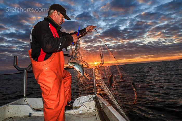 der Fischer Kaj und die Fische der Ostsee