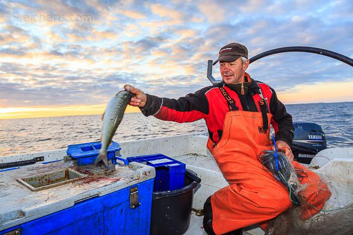 Der Fisch wird direkt auf Eis gelegt