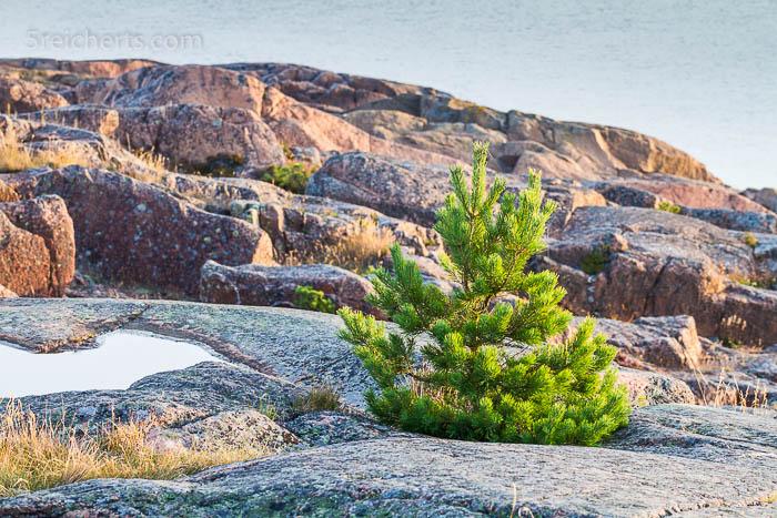 frische Grün zwischen den Felsen