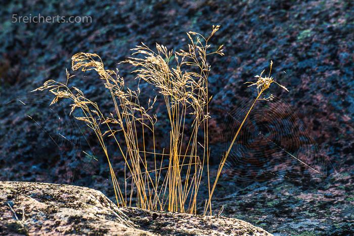 Gras und Spinnenwebe zwischen den Felsen