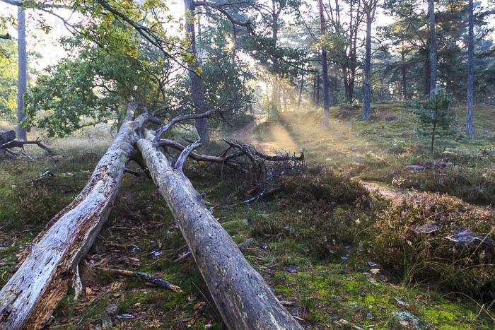 Nebel und Sonne im Wald