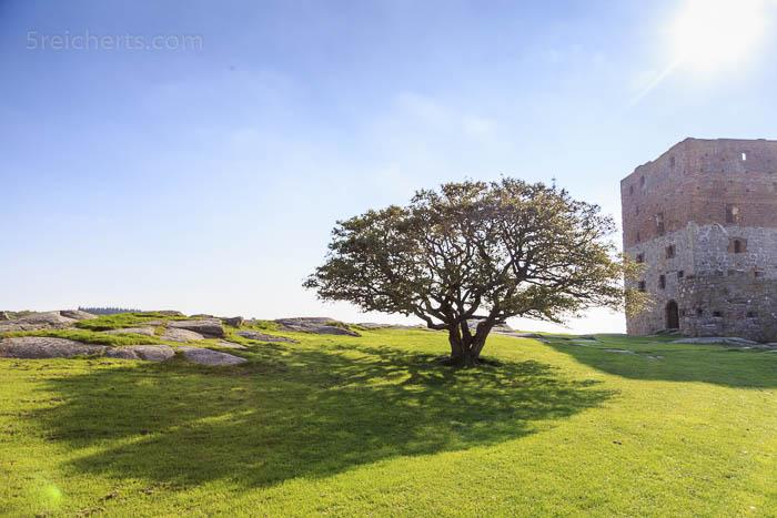 Ein Baum auf dem Gelände der Burgruine