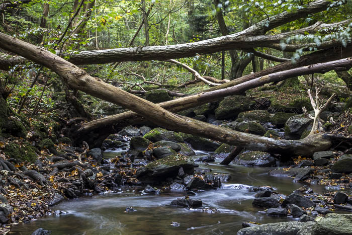 Bäume und kleiner Bach