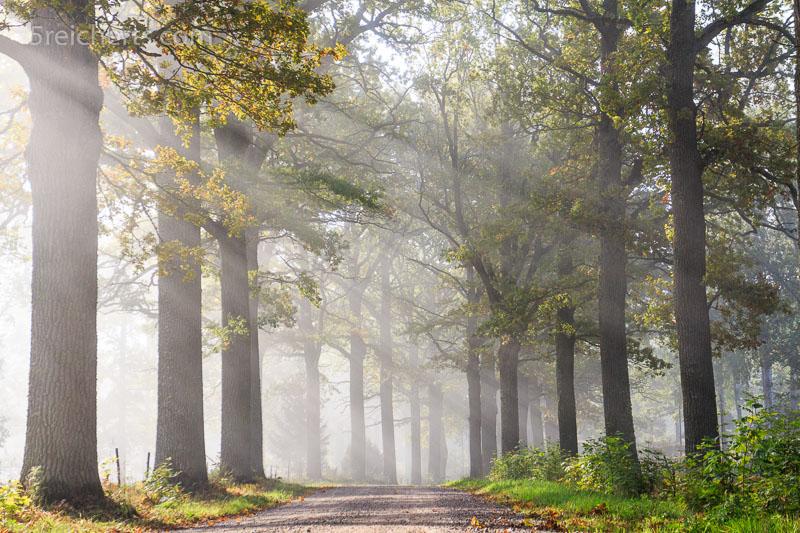 Morgenlicht fällt auf die Eichenallee. ISO 200, 1/250 s. Blende 8.