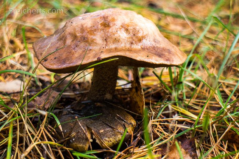 Ein Männlein steht im Walde. Pilze wuchsen überall. ISO 200, 1/100 s. Blende 5.6