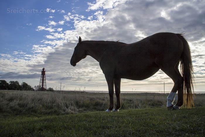 Pferd und Kapelludden Leuchtturm