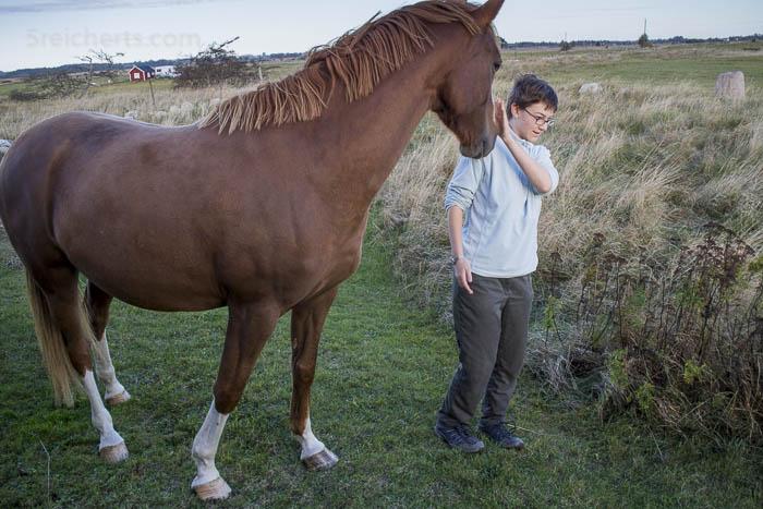 Das Pferd und AmyDas Pferd und Amy
