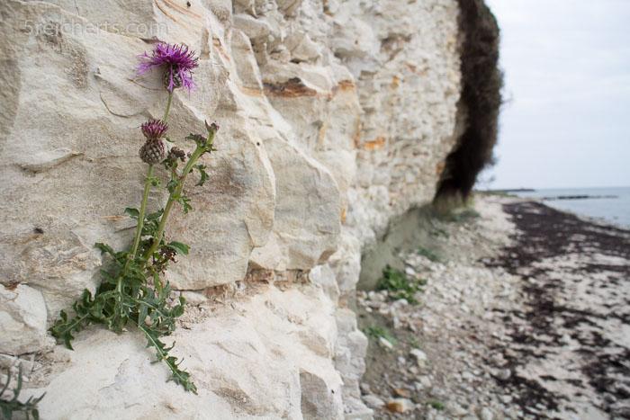 Auch auf Kalkstein kann noch was wachsen