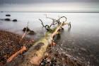 Die Ostseeinsel Rügen