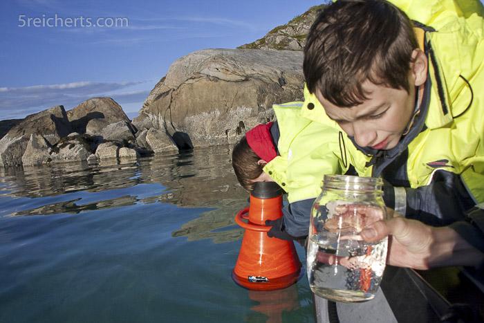 Wir erkunden die Unterwasserwelt vom Forschungsboot aus.