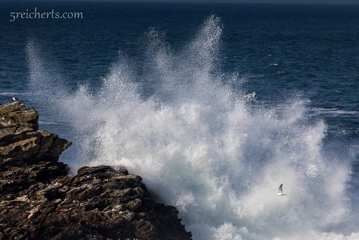 Welle mit Möwe, Pointe de Poulains, Belle île