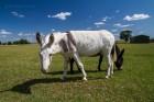Esel am Radweg