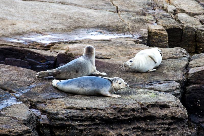 Ein paar Robben, die sich auf der Insel anruhen