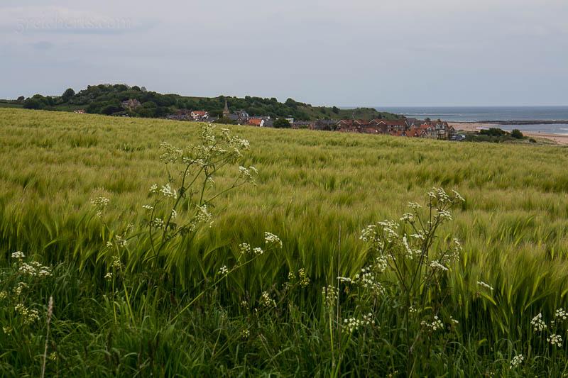 Die Nordenglische Landschaft besteht zu einem grossen Teil aus Feldern