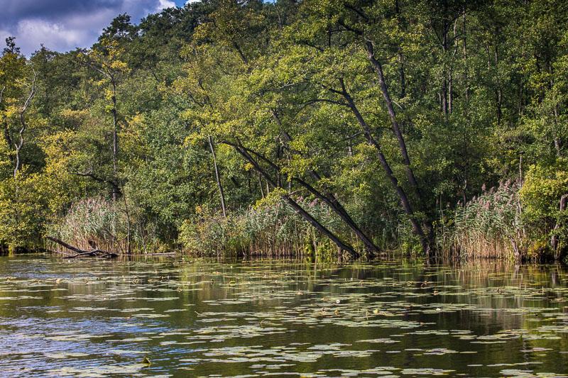 Bäume am Ufer der Havel