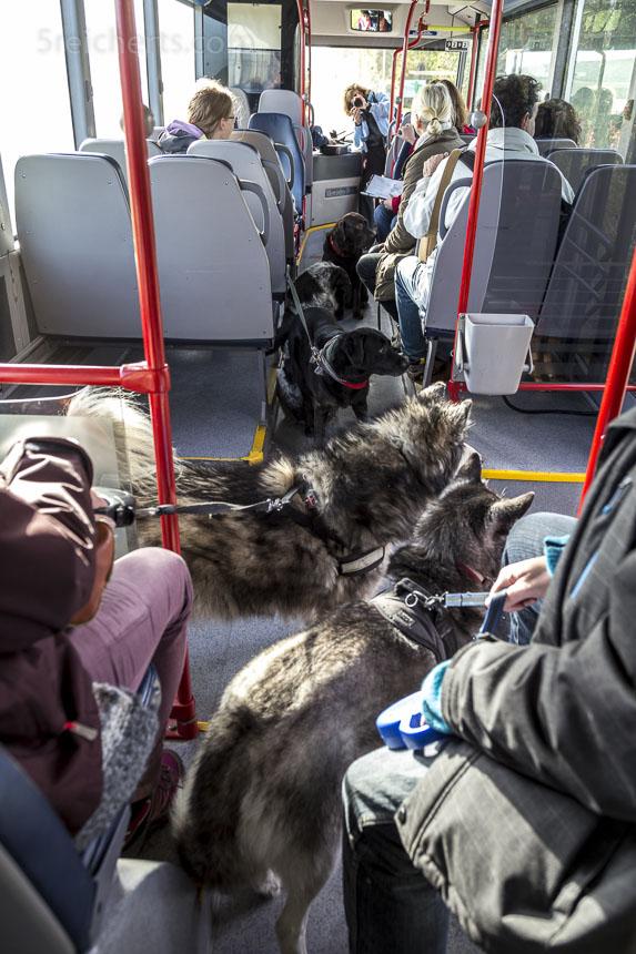 Ein Bus voller Hunde