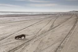 Eine Dackel auf Texel