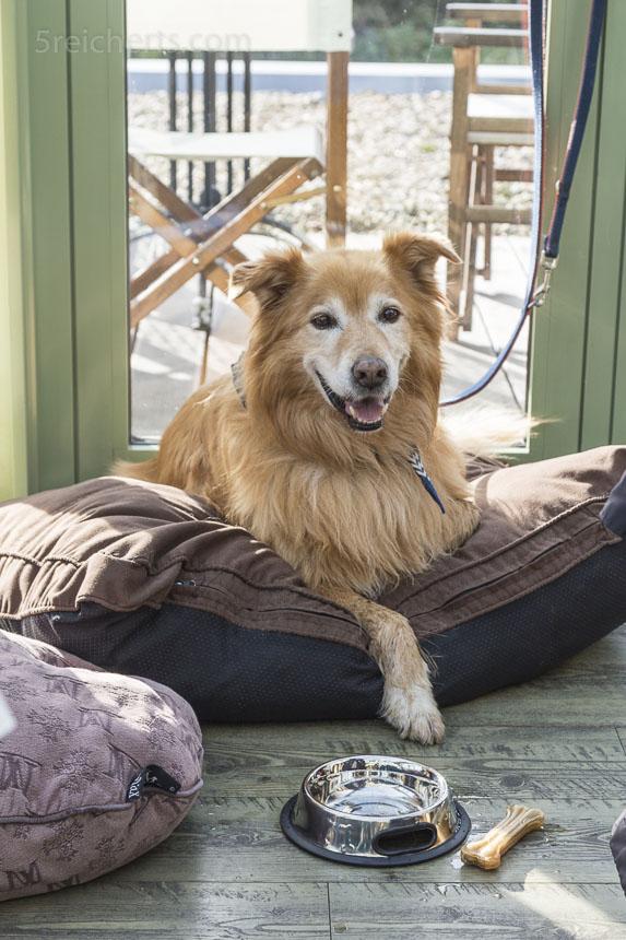 So bequem liegen Hunde in einigen Restaurants auf Texel