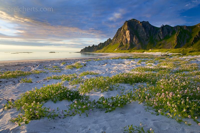 Bleik Strand, Vesterålen