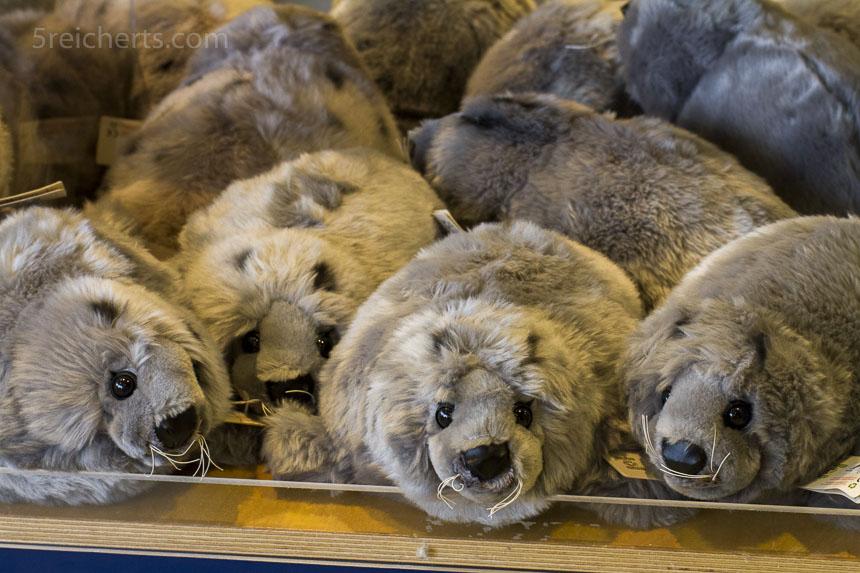 Die Seehunde im Souvenirladen kann man knuddeln