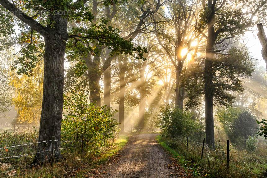 Gegenlicht am frühen Morgen. Die Sonnenstrahlen sind gut im Morgendunst zu erkennen, die grelle Sonne wir durch das Geäst gedämpft. Die Stimmung ist freundlch, der Weg führt direkt ins Licht.