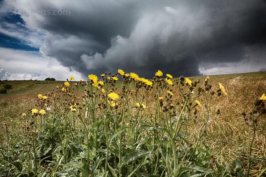 Blümchen und Gewitterwolken