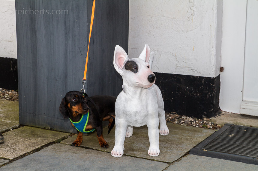 Eine lebensechte Bullterrier Figur und Grindel