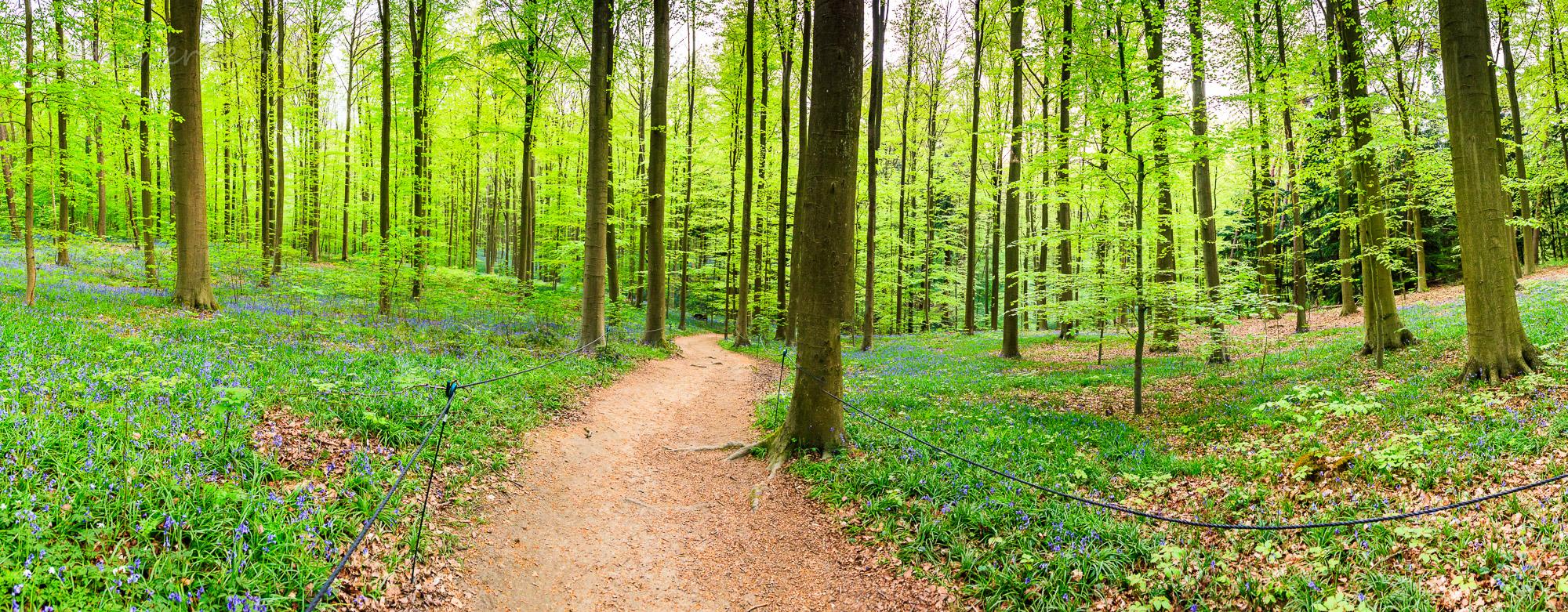 Hallerbos-Waldweg